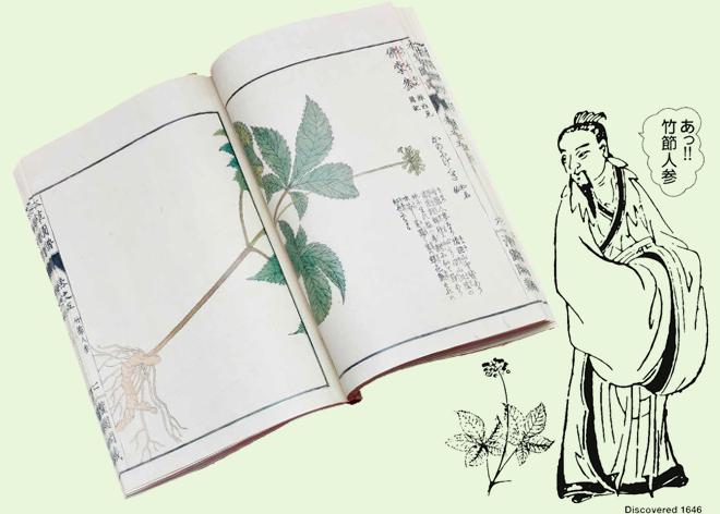 薬用竹節人参を発見